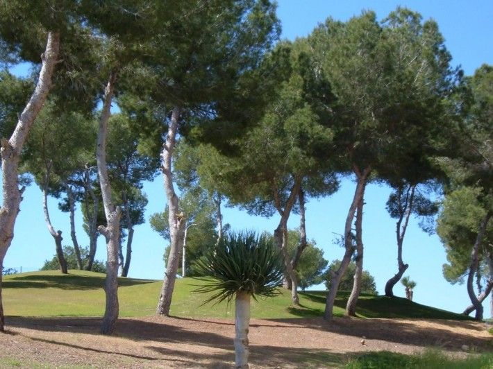 Front line golf apartment in Las Ramblas
